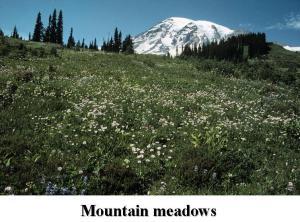 Rainier - Meadows